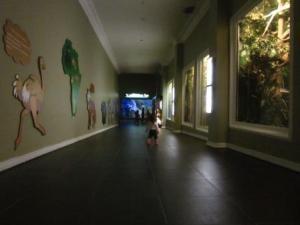 interior Museum Satwa